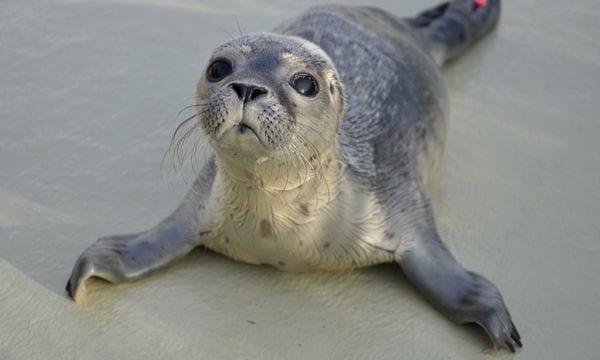 volontariato foche