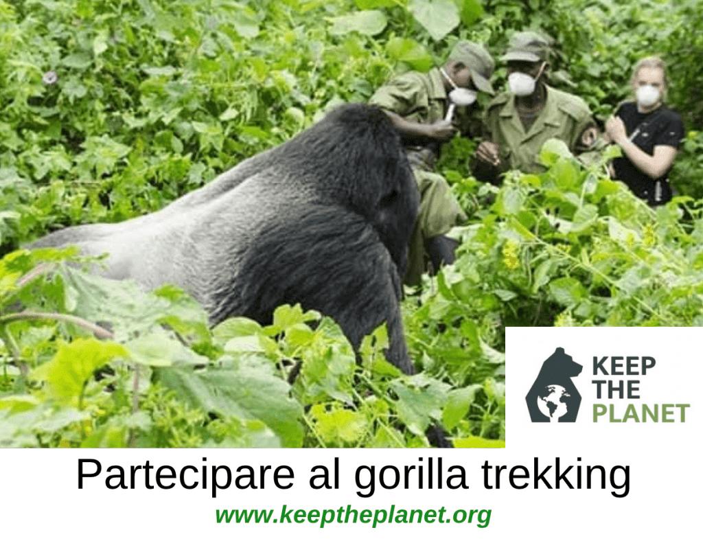 uganda trekking gorilla