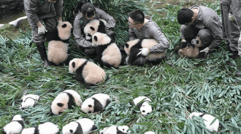 esperienze volontariato animali