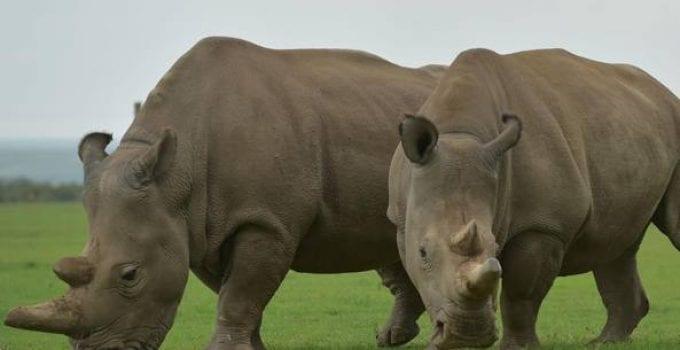 volontariato ambientale con i rinoceronti