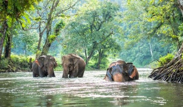 volontariato ambientale in thailandia