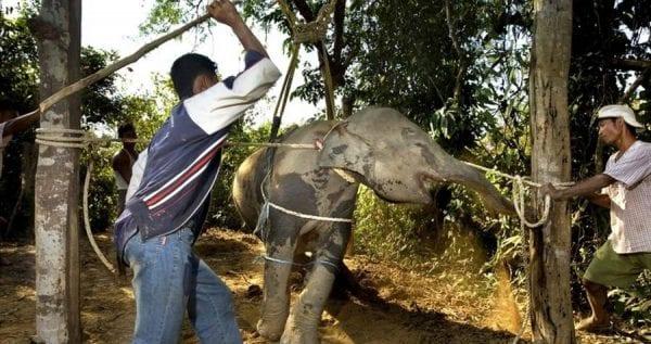 volontariato con elefanti in Thailandia