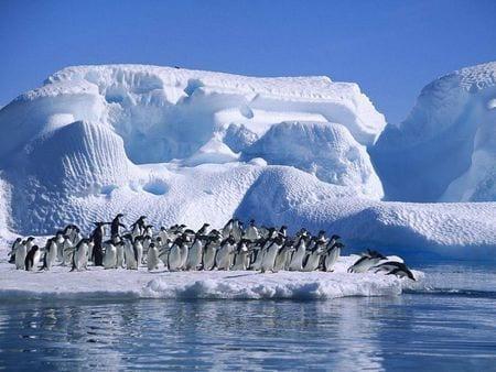 lavorare per la conservazione dei pinguini