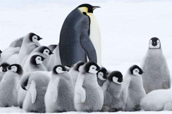 volontariato con i pinguini
