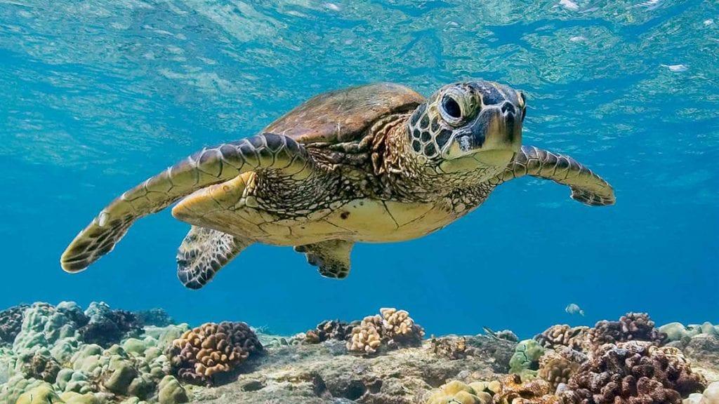 campi di volontariato tartarughe marine