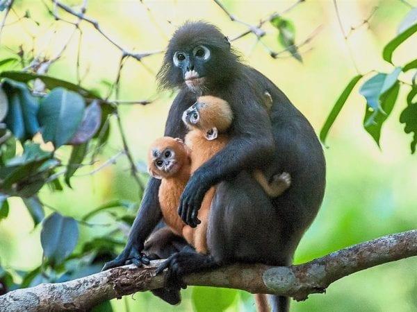 salvare gli animali selvatici dall'estinzione