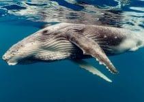 volontariato con le balene