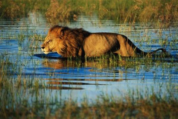 volontariato in Botswana