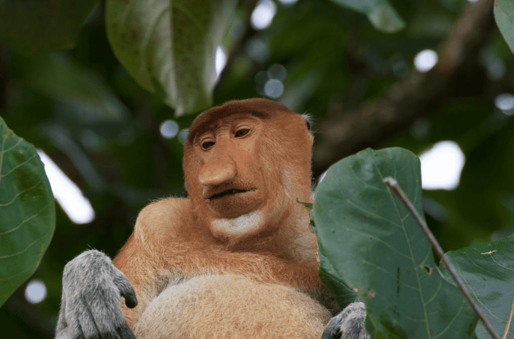 progetto riforestazione indonesia