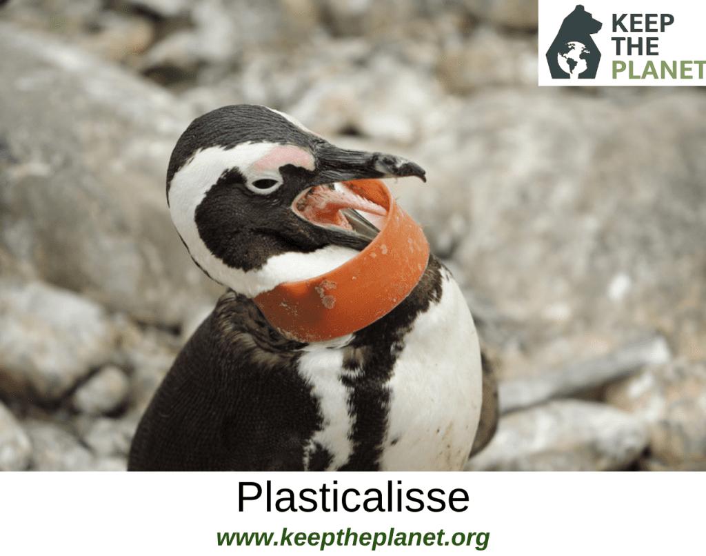 cos'è la plastica