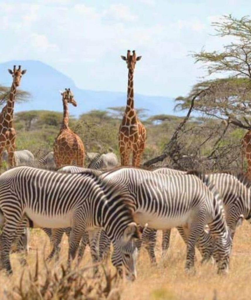 cosa vedere in kenya