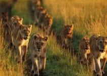 parchi e animali del kenya