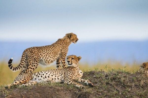 viaggio naturalistico in Kenya