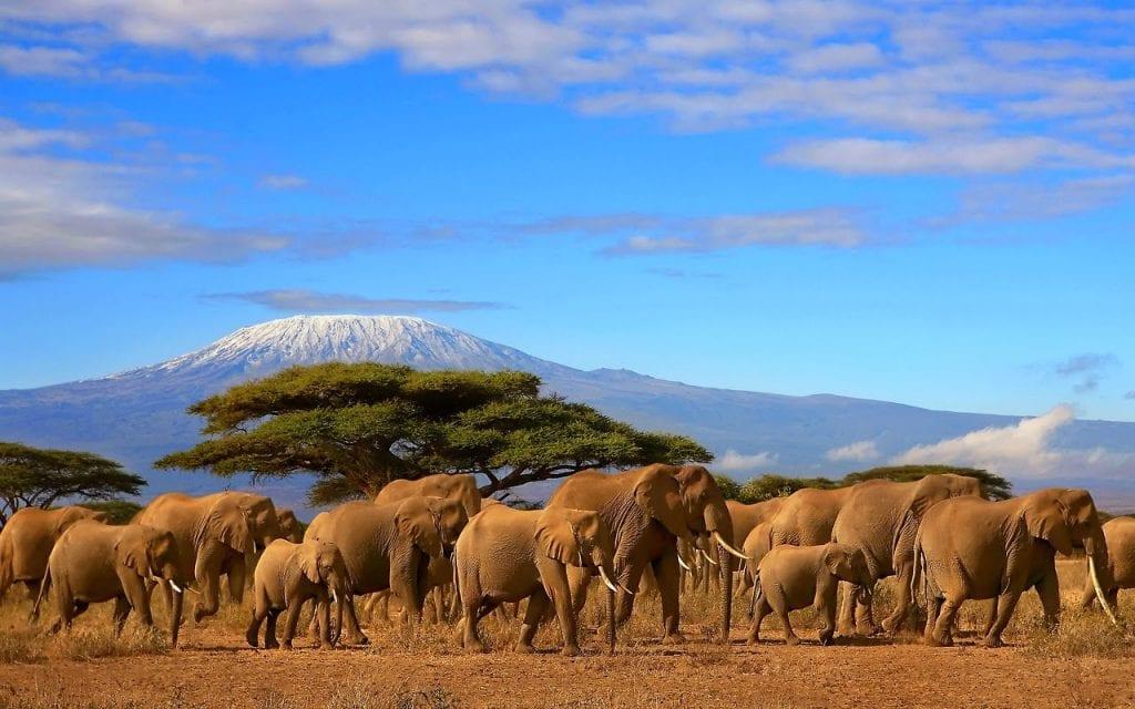 viaggio naturalistico in tanzania