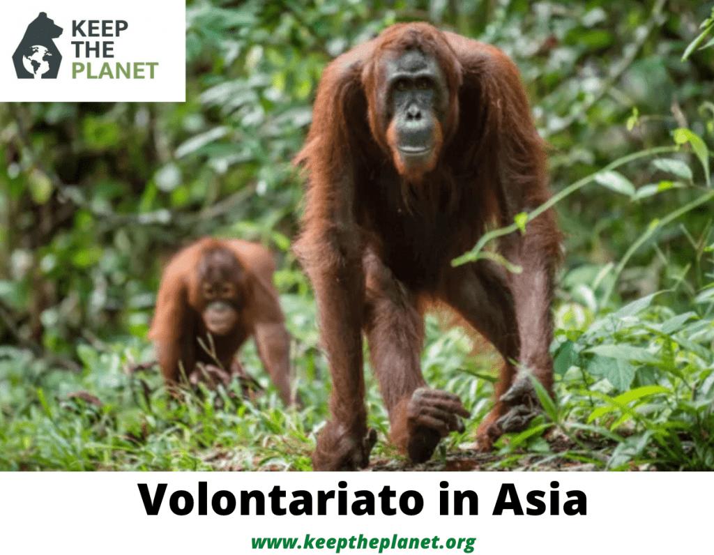 volontariato ambientale in asia