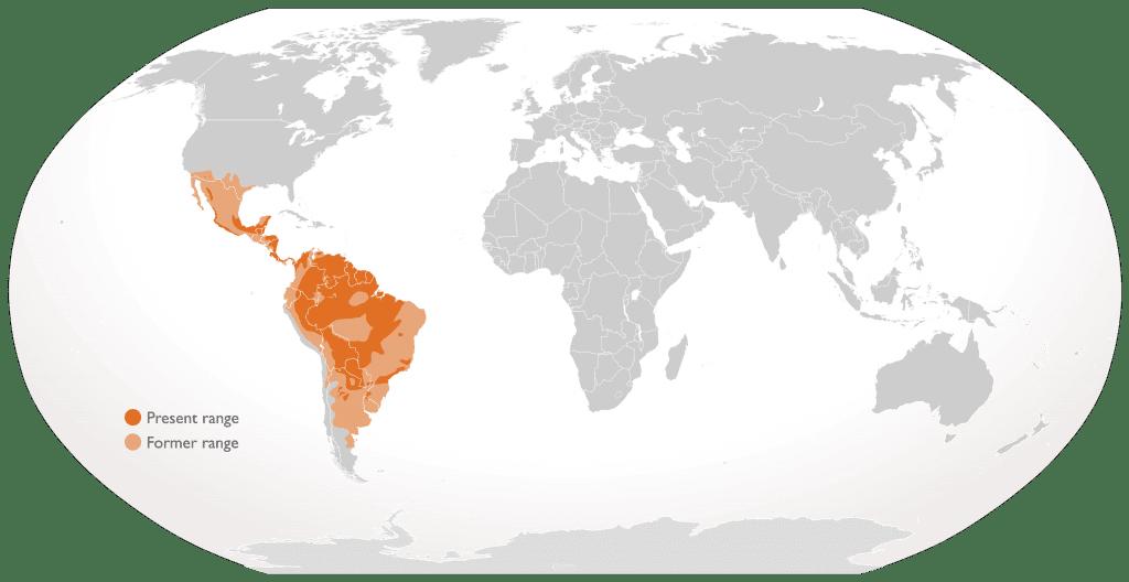 dove vive il giaguaro