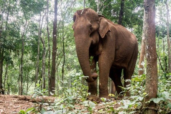 viaggi volontariato cambogia
