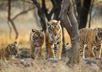 viaggio naturalistico in india