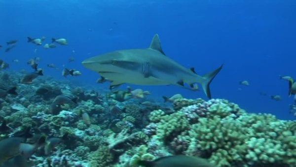 animali della barriera corallina