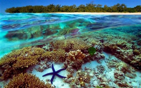 grande barriera corallina come si forma
