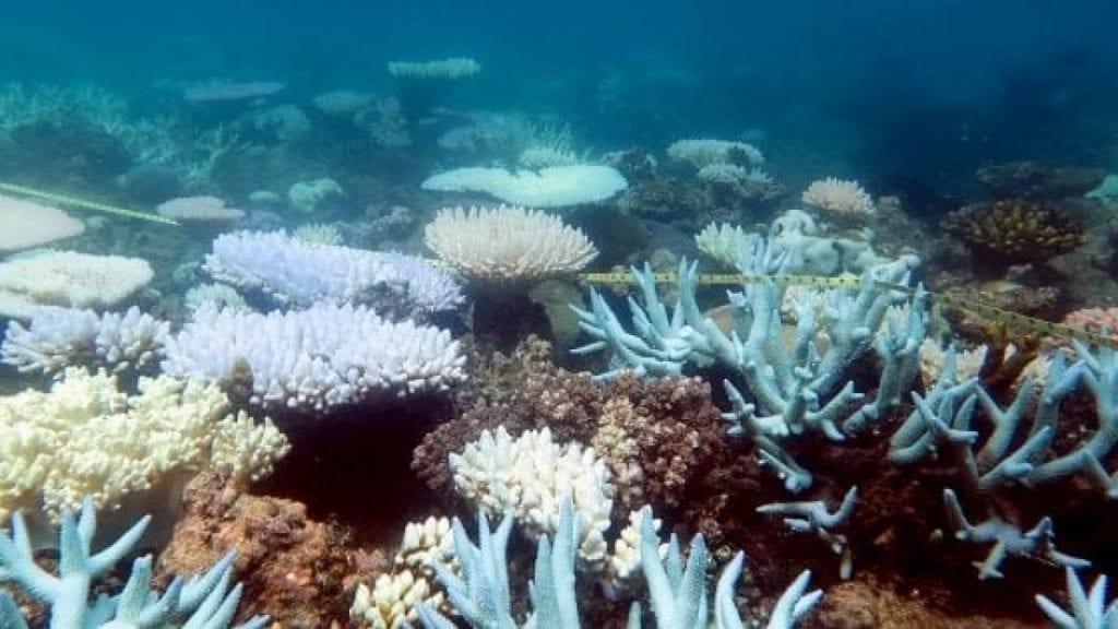 sbiancamento coralli