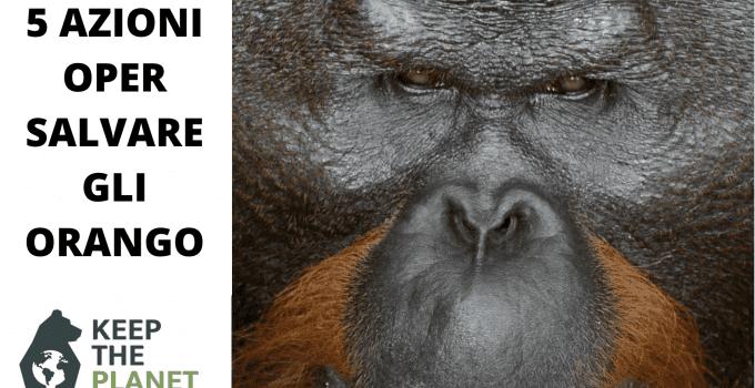 salvare gli orango