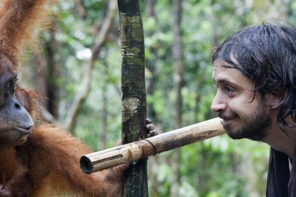 come salvare gli orango