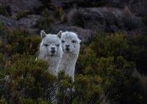 viaggio naturalistico in bolivia