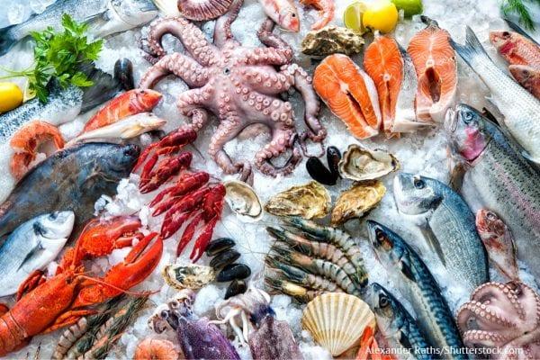 prodotti ittici impatto ambientale