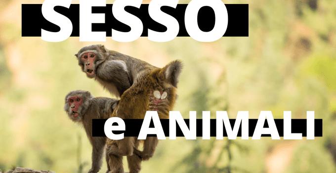 sesso e animali