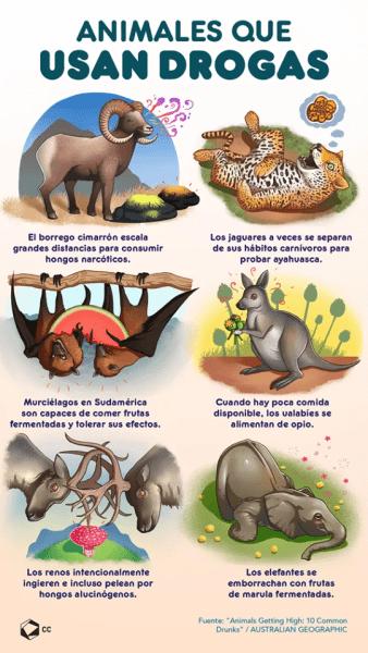 animali e droga