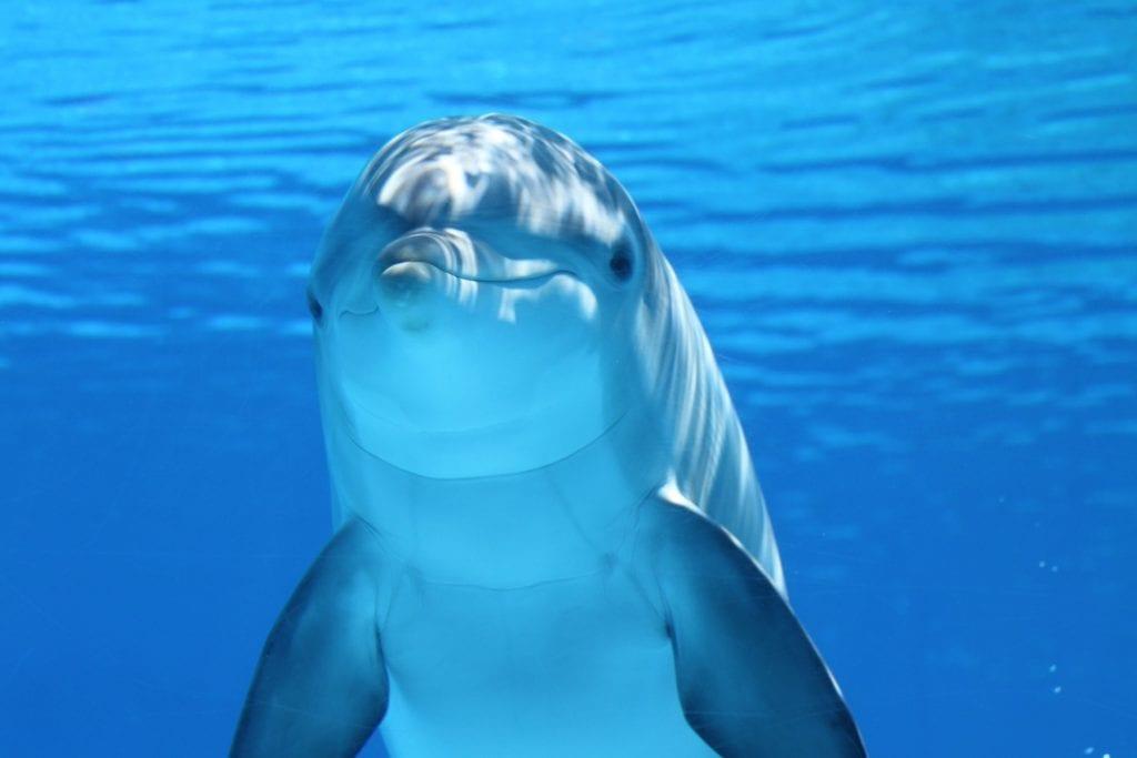 delfini ecologia