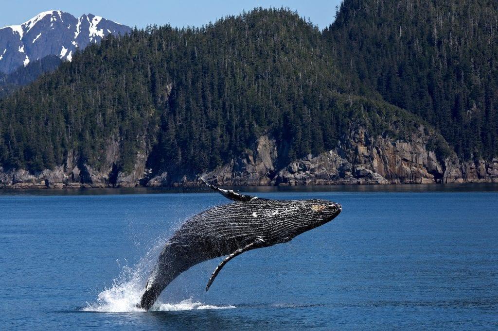 dove vivono le balene