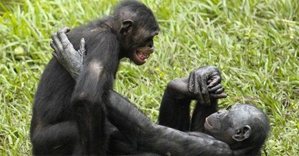 piacere sessuale negli animali