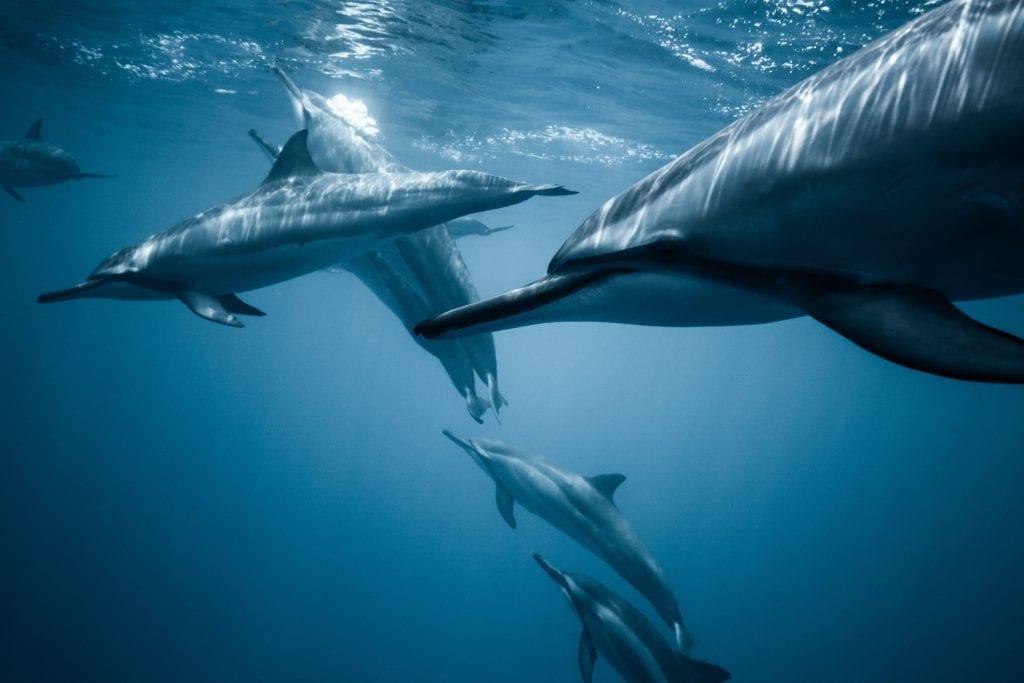 specie di delfini