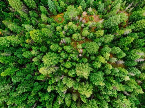come nascono le foreste