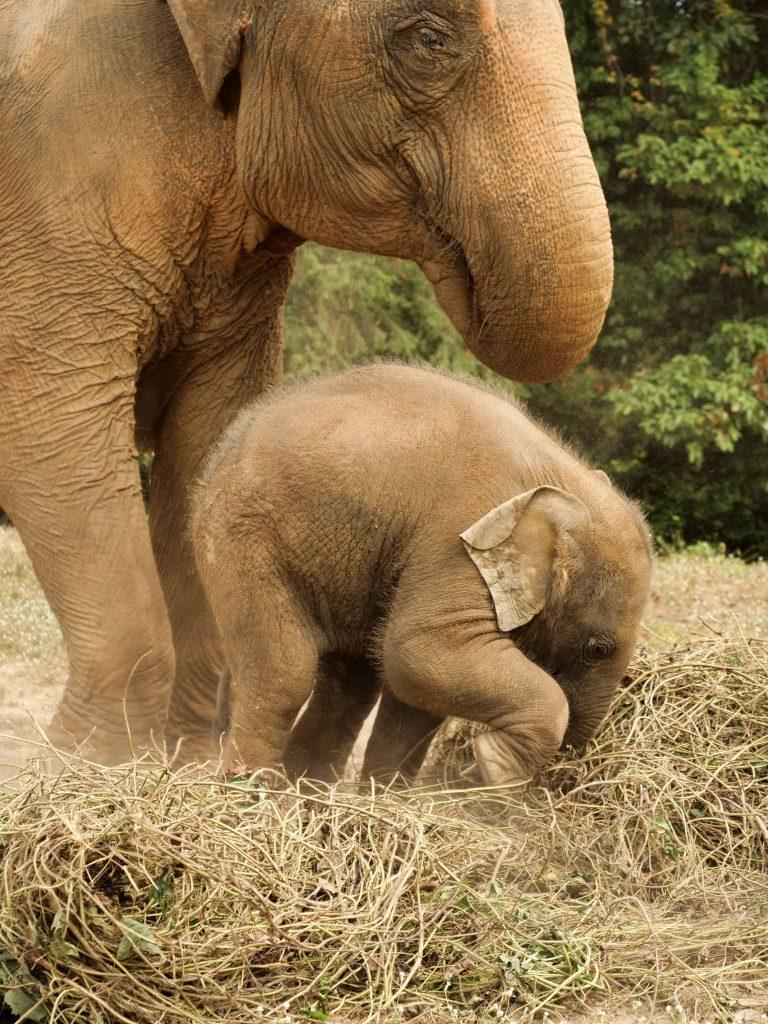 elefanti maltrattati