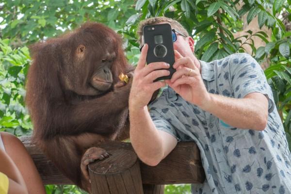 no selfie con animali selvatici