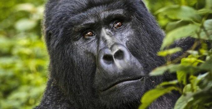 viaggio naturalistico in uganda
