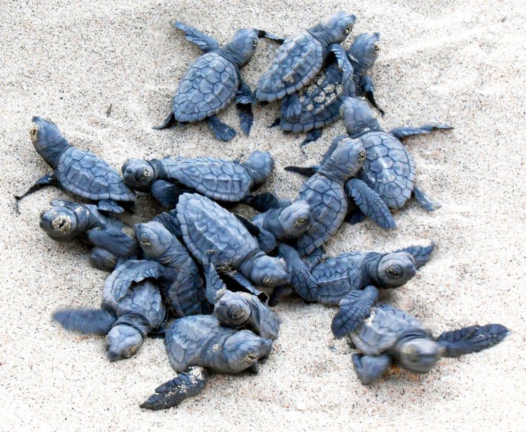 viaggio natura in costa rica