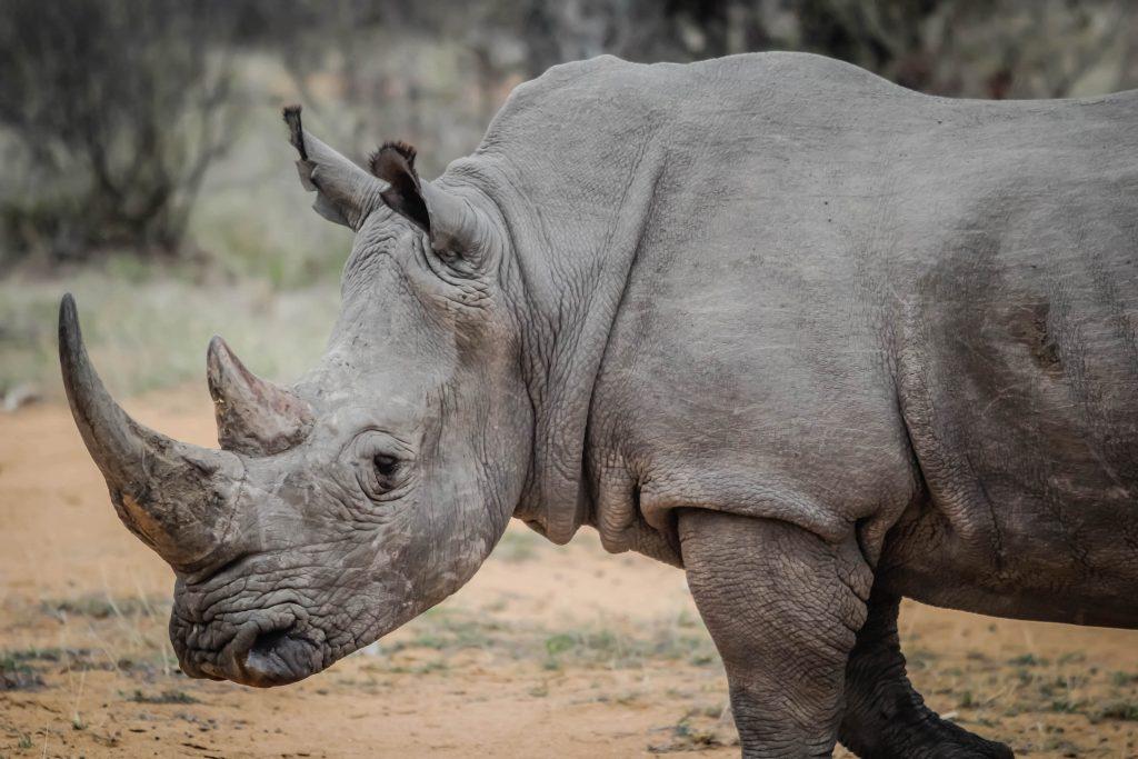 volontariato ambientale rinoceronti