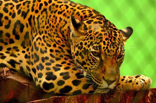 corridoio ecologico in amazzonia